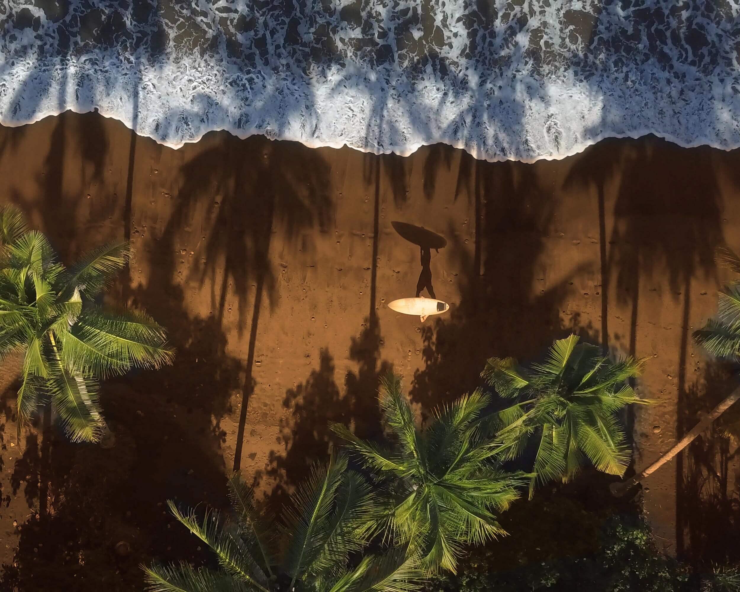 Strand am Meer mit Surfbrett und Palmen Themenbild Old Donald's Schale Kokosnuss rund goldiger Rand Behälter für Grinder Inhalt Cbuy.ch Alles Gute aus Cannabis Schweizer CBD Hanfblüten CBD Produkte CBD Öle Hanf-Lebensmittel Schlafen Schmerzen Entspannung Natur SWISS Gate AG